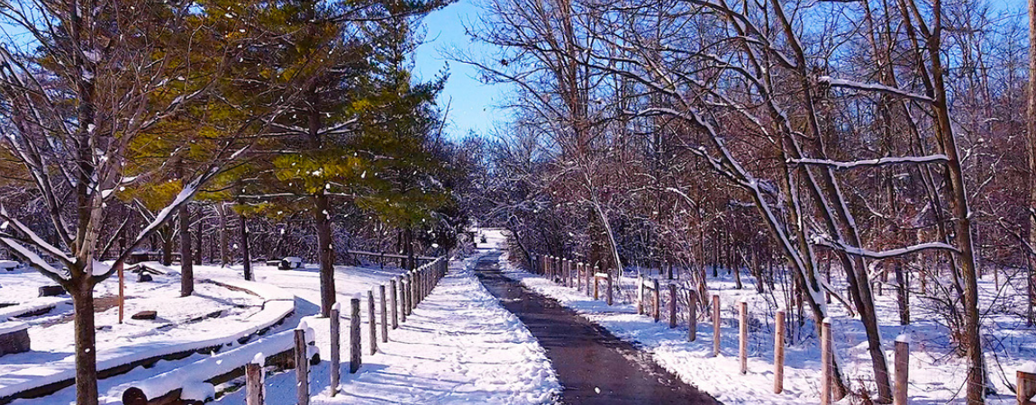 Brantford trail in winter.